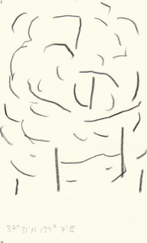 olivier-aubry-dessin-foret